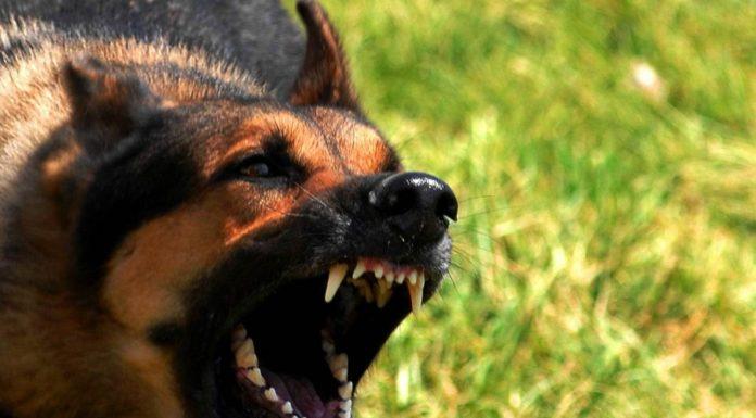Пьяный житель Челябинска натравил собаку на врачей скорой помощи
