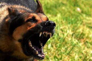 Врач заставила тюменца отвечать в суде за нападение его собаки