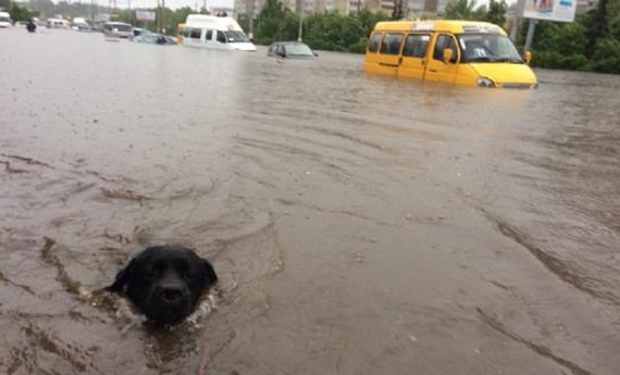 В Ульяновске из-за сильного дождя заглохли пять скорых