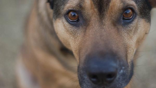 В Подмосковье собака не подпускала врачей к умирающему хозяину