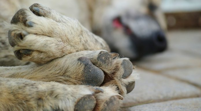В Иркутской области собаки покусали медсестру на территории больницы