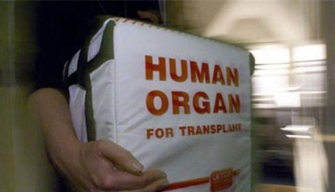 В Новосибирской области большинство главврачей бойкотирую программу донорства